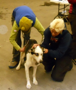 Bashful gets a thorough examination from Quest Vets